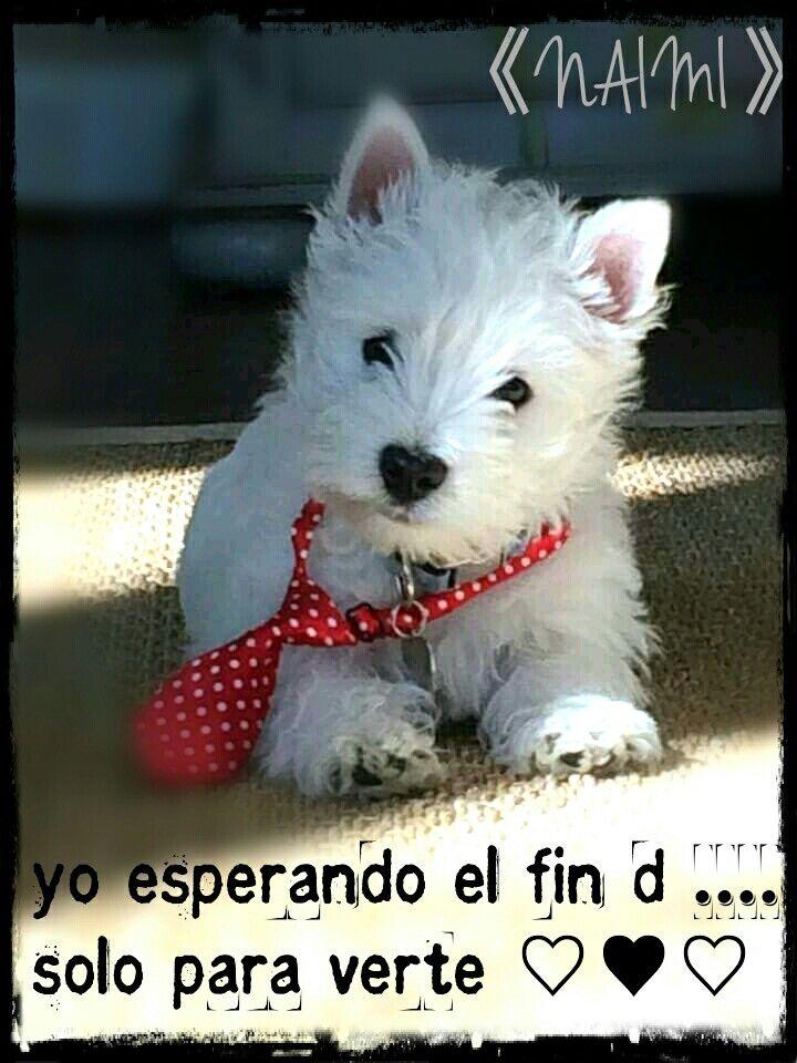 Frases Amor Te Extrano Animales Bebe Bonitos Perros Bonitos