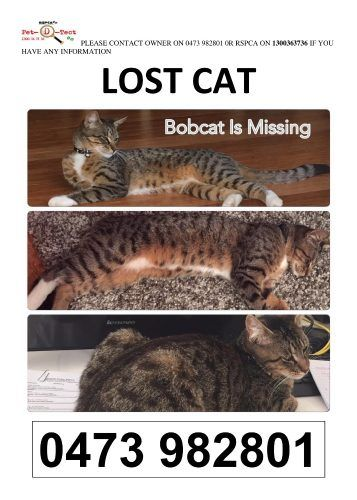 Missing Cat Benowa Ashmore Carrara Gold Coast Lost Cat Cats
