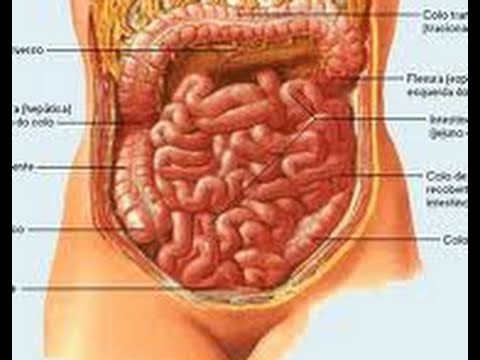 Como desintoxicar el intestino de forma natural