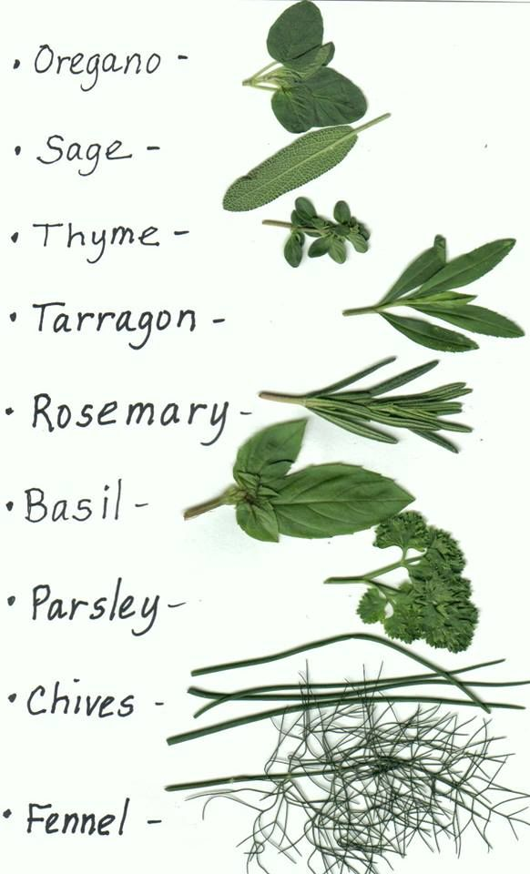 Pin by Phoebe on GARDEN ~ Herbs   Pinterest   Herbs, Gardens and ...