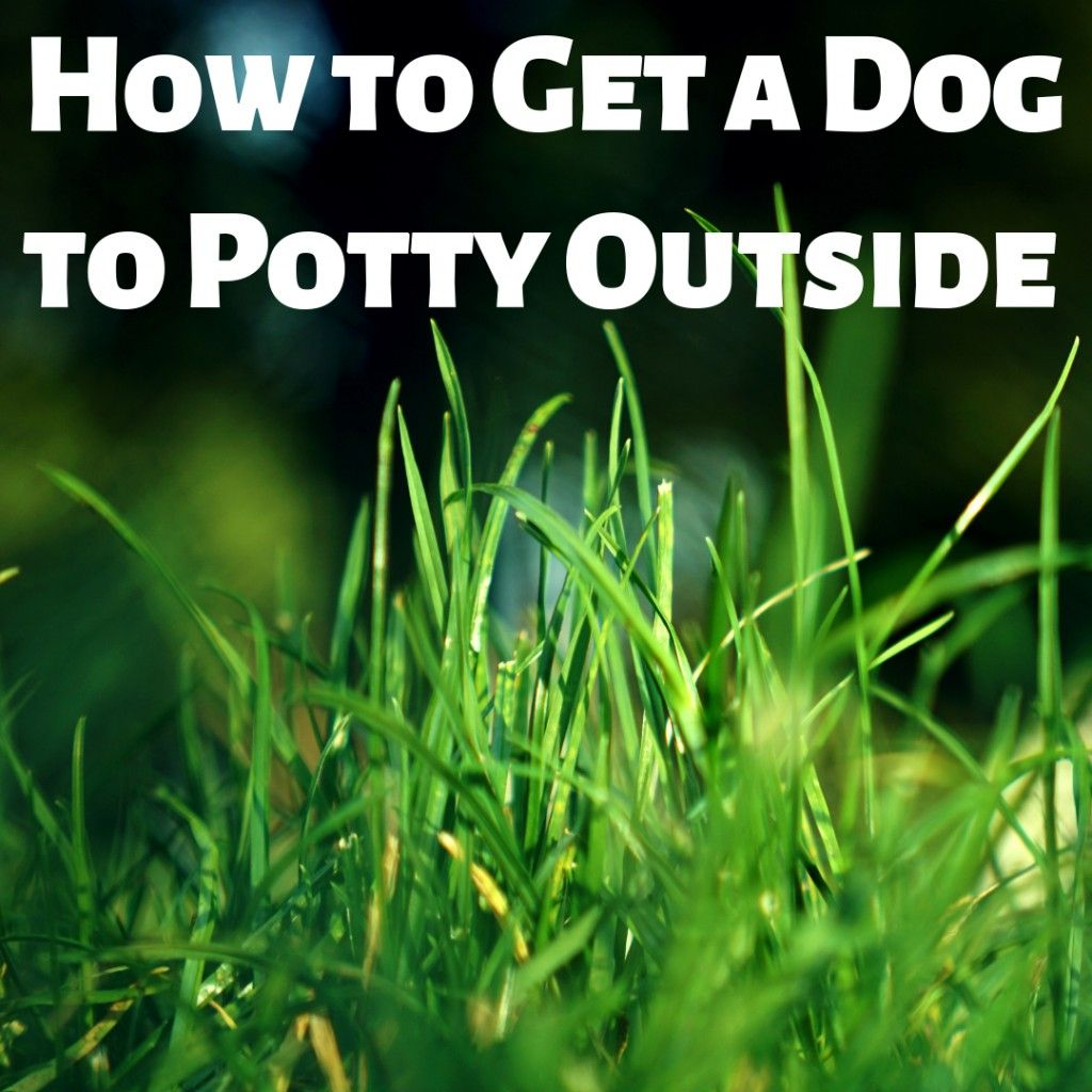 How to Wean a Dog Off Training Pads and Get Them to Potty