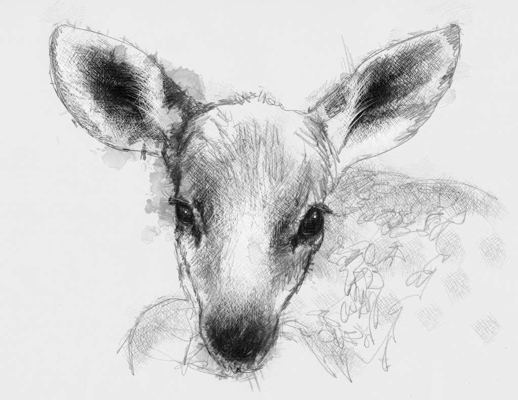 artist sean briggs producing a sketch a day fawn art drawing fawn