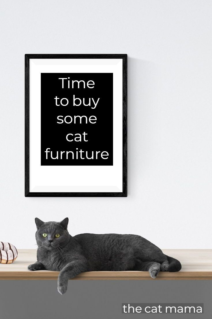 I M Living In A Small Apartment With 2 Cats Time To Buy Cat Furniture First Time Cat Owner Tips Cat Apartment Buy A Kitten Cat Facts