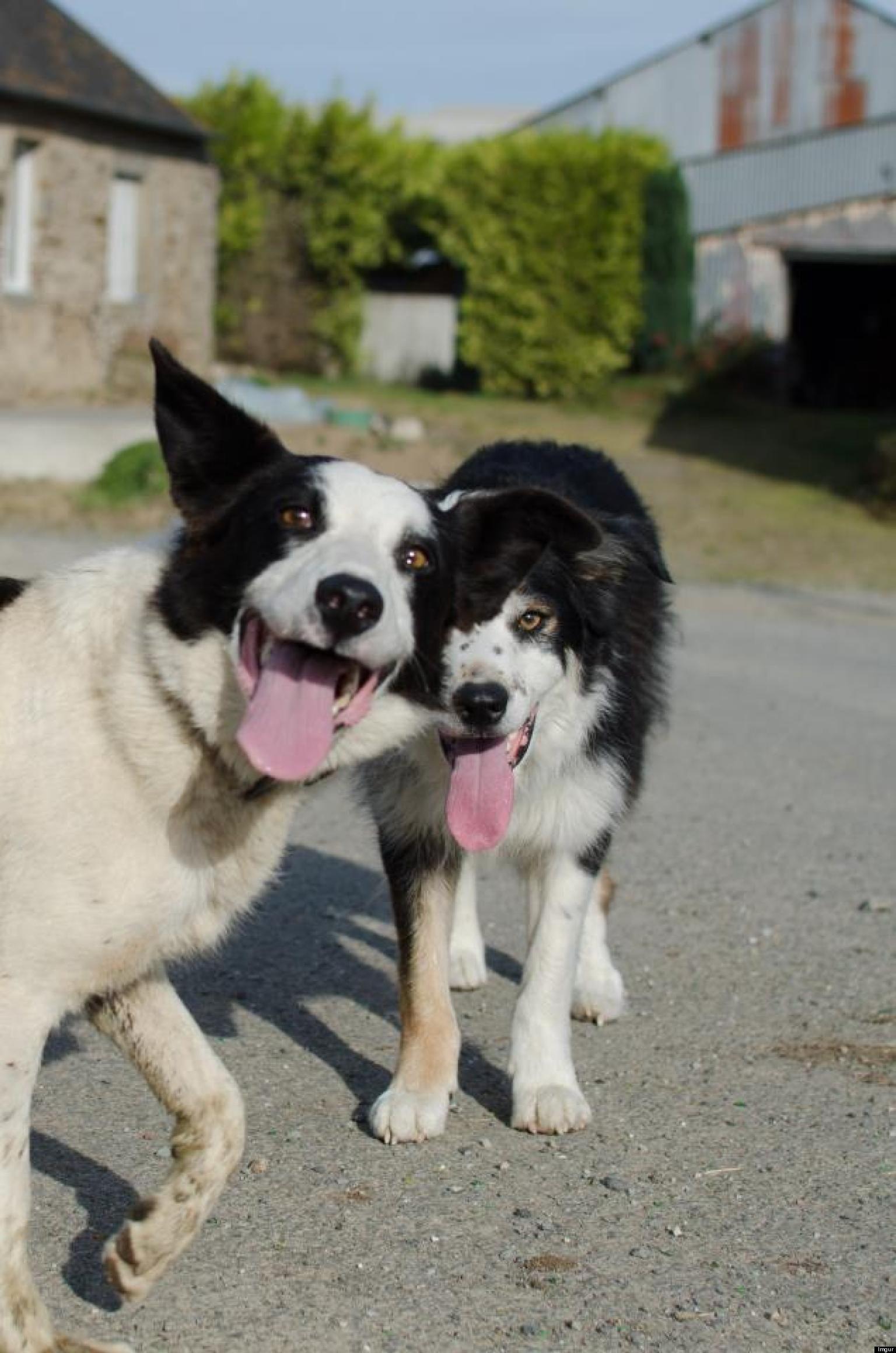 15 Incredible Dog Photobombs Photos Dog Love Funny Animal
