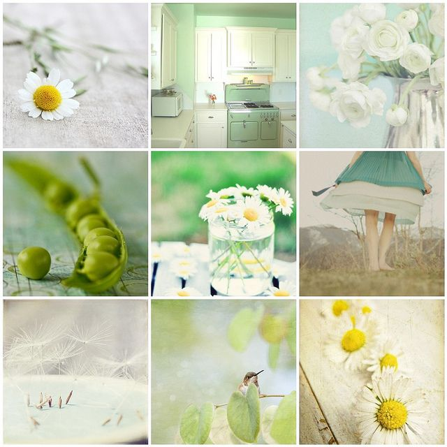 lazy daisies and more... by pilli pilli, via Flickr
