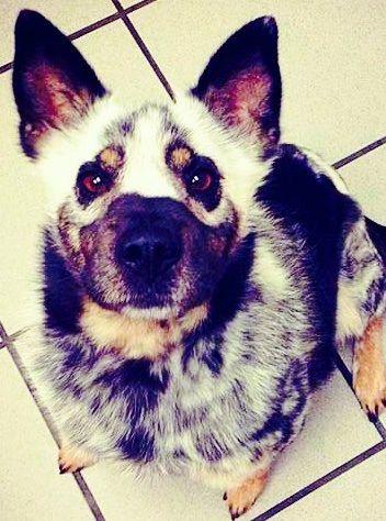 Dog has strange color mutations   ANIMALS WITH UNUSUAL ...