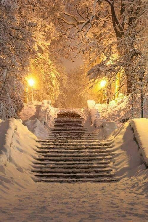 "safarikt: "" forever-winter-wonderland: "" *Winter Wonderland* "" "" #winterlandscape"