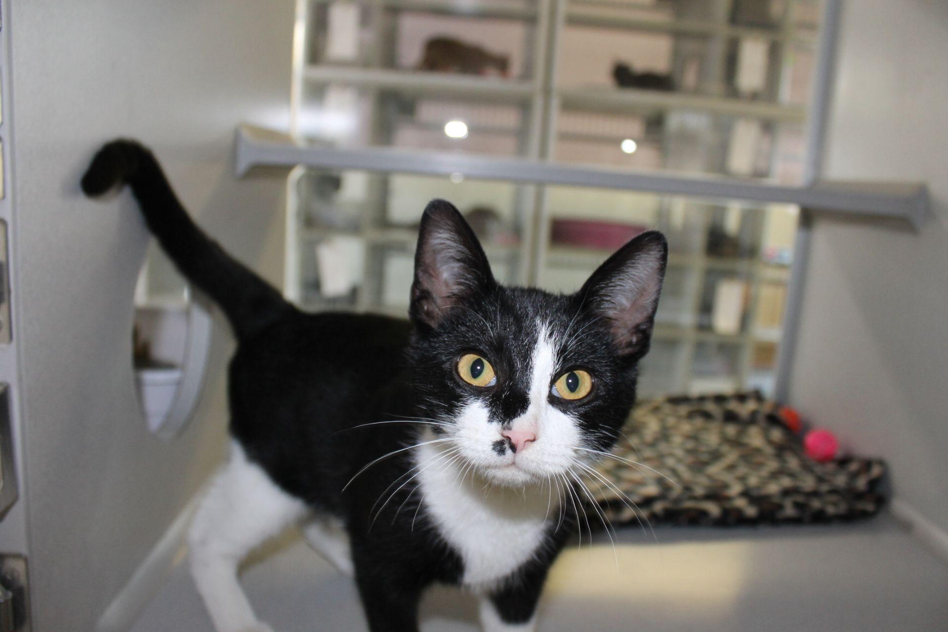 Adopt Rudy on Kitten adoption, Saving cat, White cats