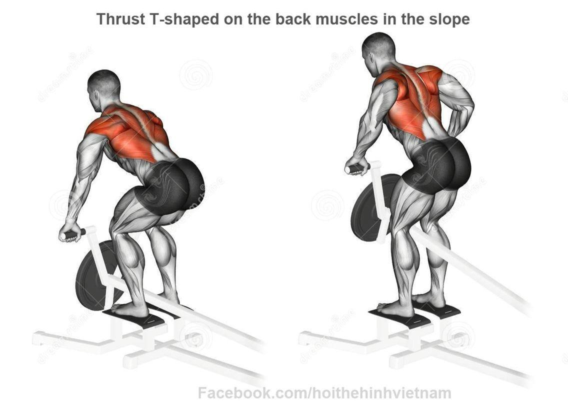 Espalda | Fisiologia/Anatomia Espalda | Pinterest | Espalda y Anatomía