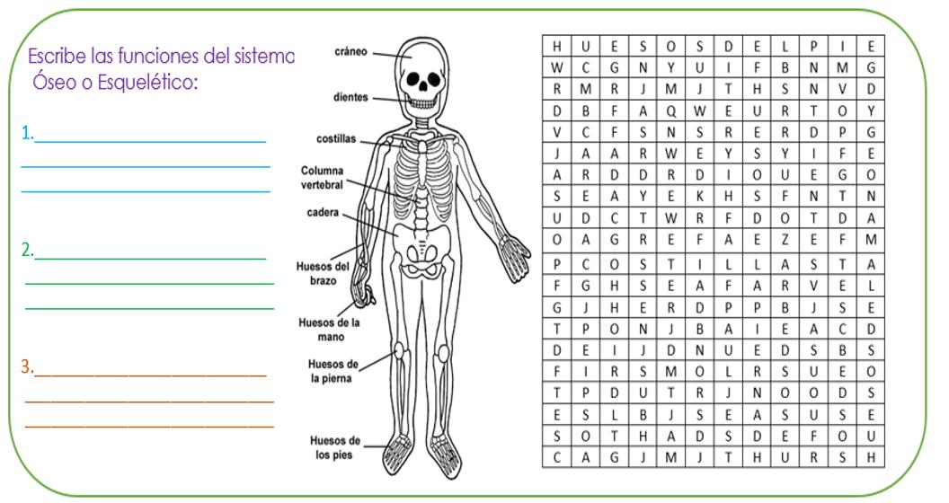 Fichas primaria: Ficha del sistema óseo | PARTES DEL CUERPO | Pinterest