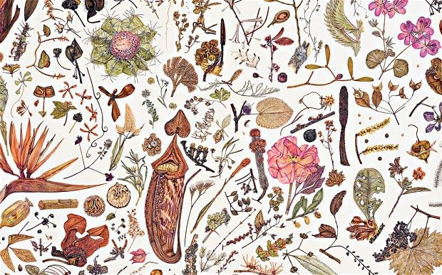 Rachel Pedder-Smith's Herbarium Specimen Painting- The Pressed Plant