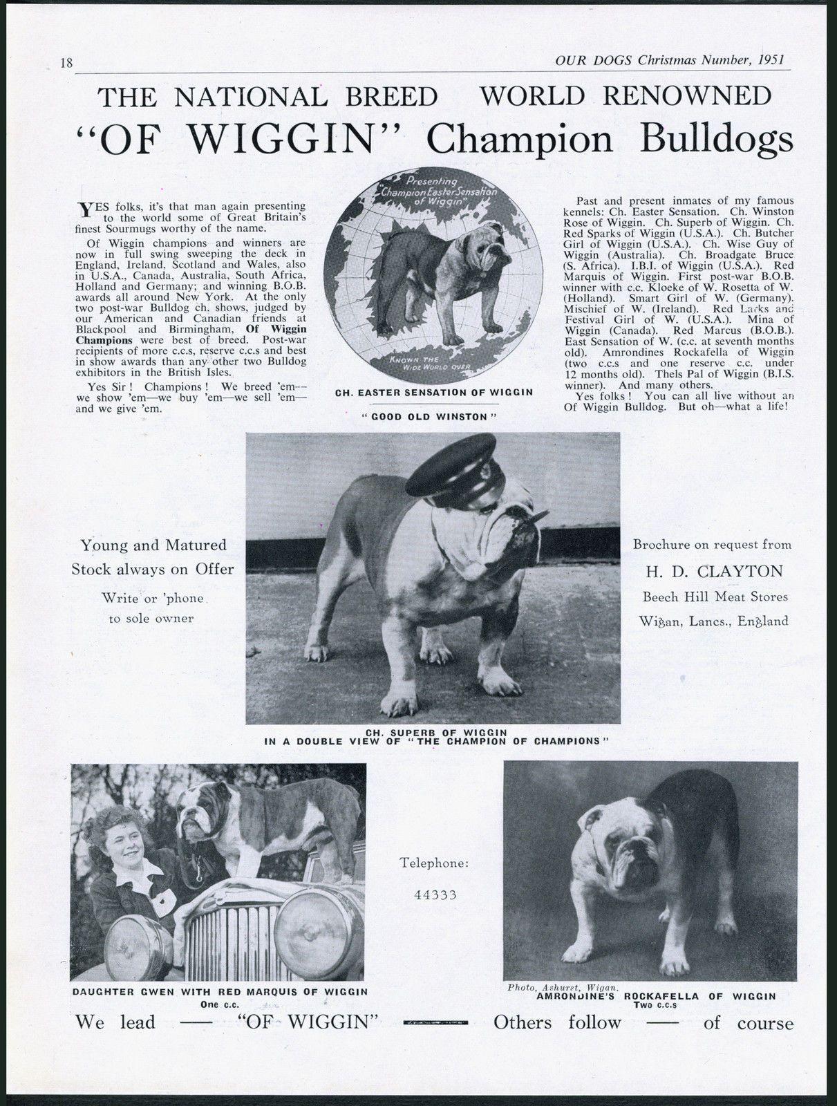 1951 Dog Wiggin Breed Kennel Christmas Dog Dogs British Bulldog