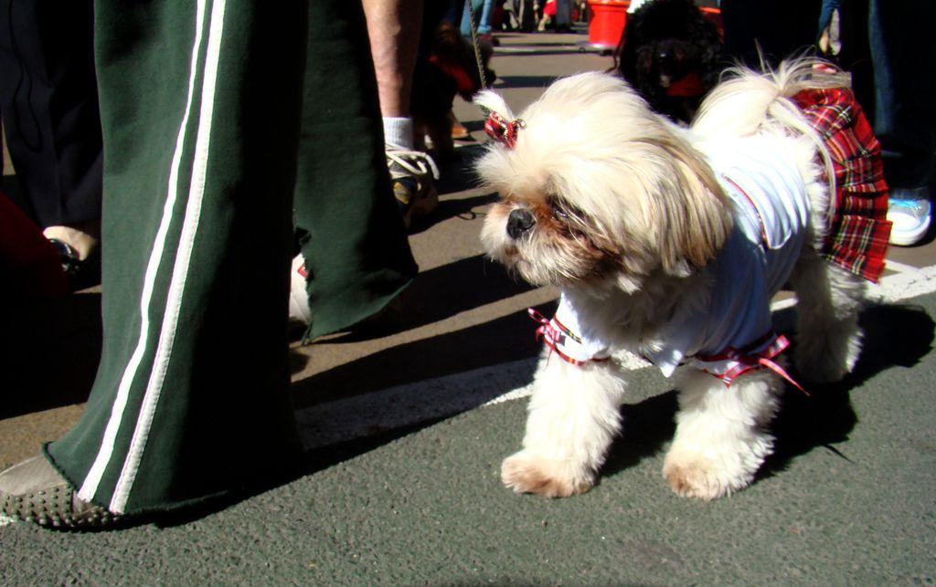 Dog Dressed As Catholic School Girl Dog Halloween Costumes Dogs Dog Halloween