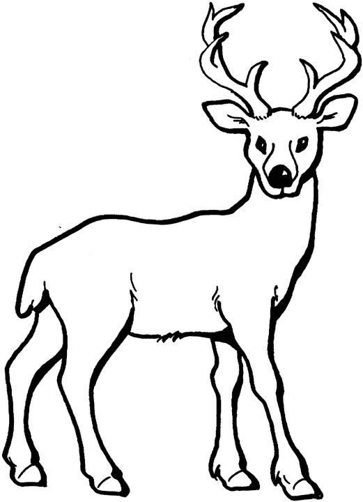Deer Coloring Page, add pipe cleaner antlers! | drawings | Pinterest ...