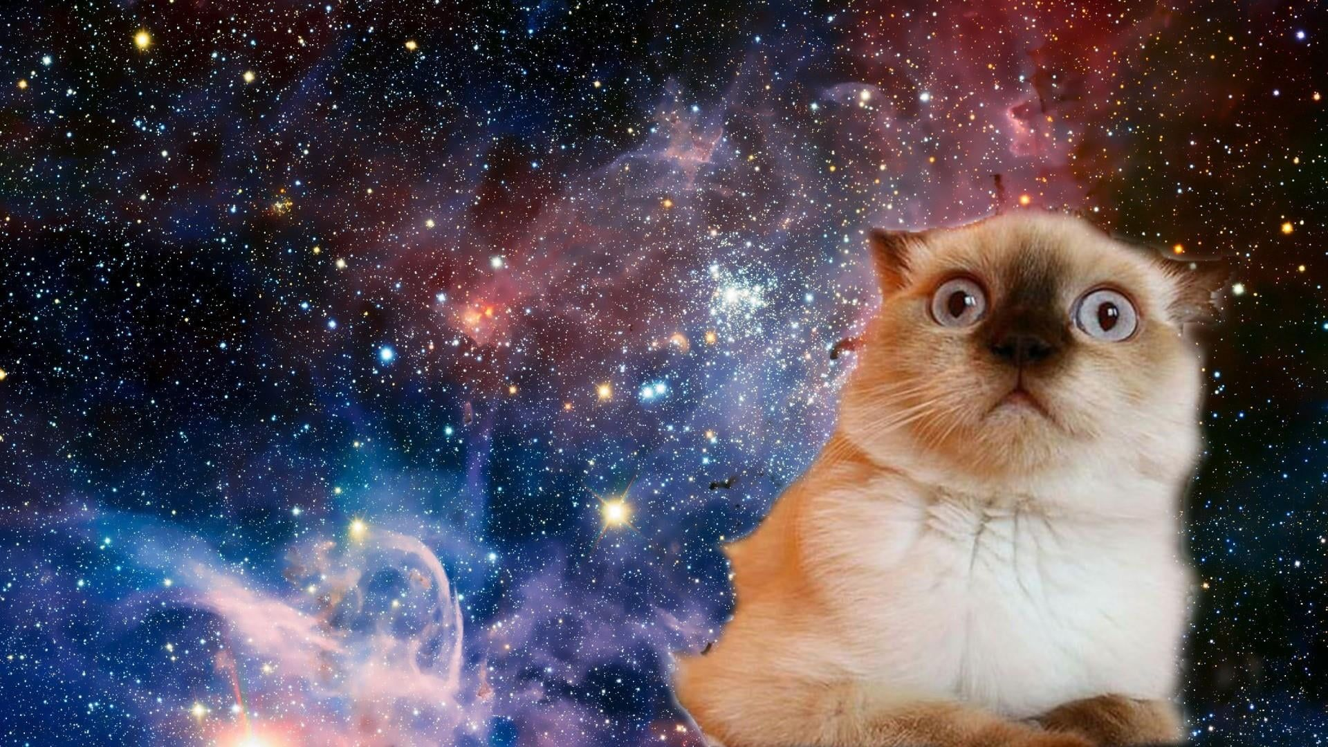Cat Space Funny Confused Face Stars 1080p Wallpaper Hdwallpaper Desktop Cat Wallpaper Funny Cat Wallpaper Funny Wallpapers