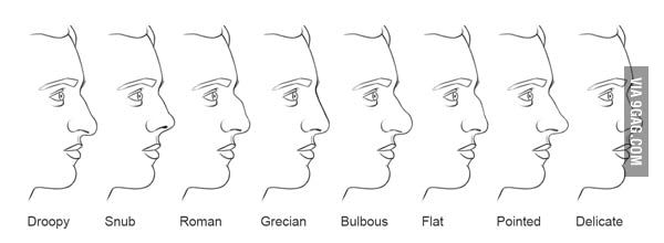 What S Your Nose Type Mine Is Grecian Nose Types Type Chart Nose Shapes