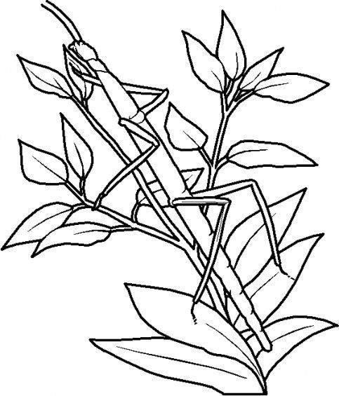 Wandelende Tak Kleurplaat 01 Gif Coloring Pages For Kids