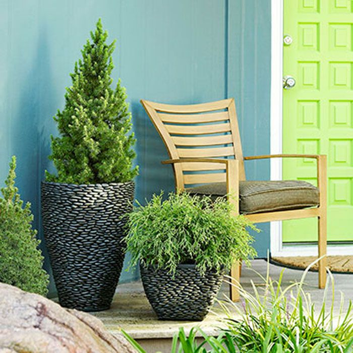 15 Beautiful Flower Pots That Will Inspire You. Patio TreesPotted ...
