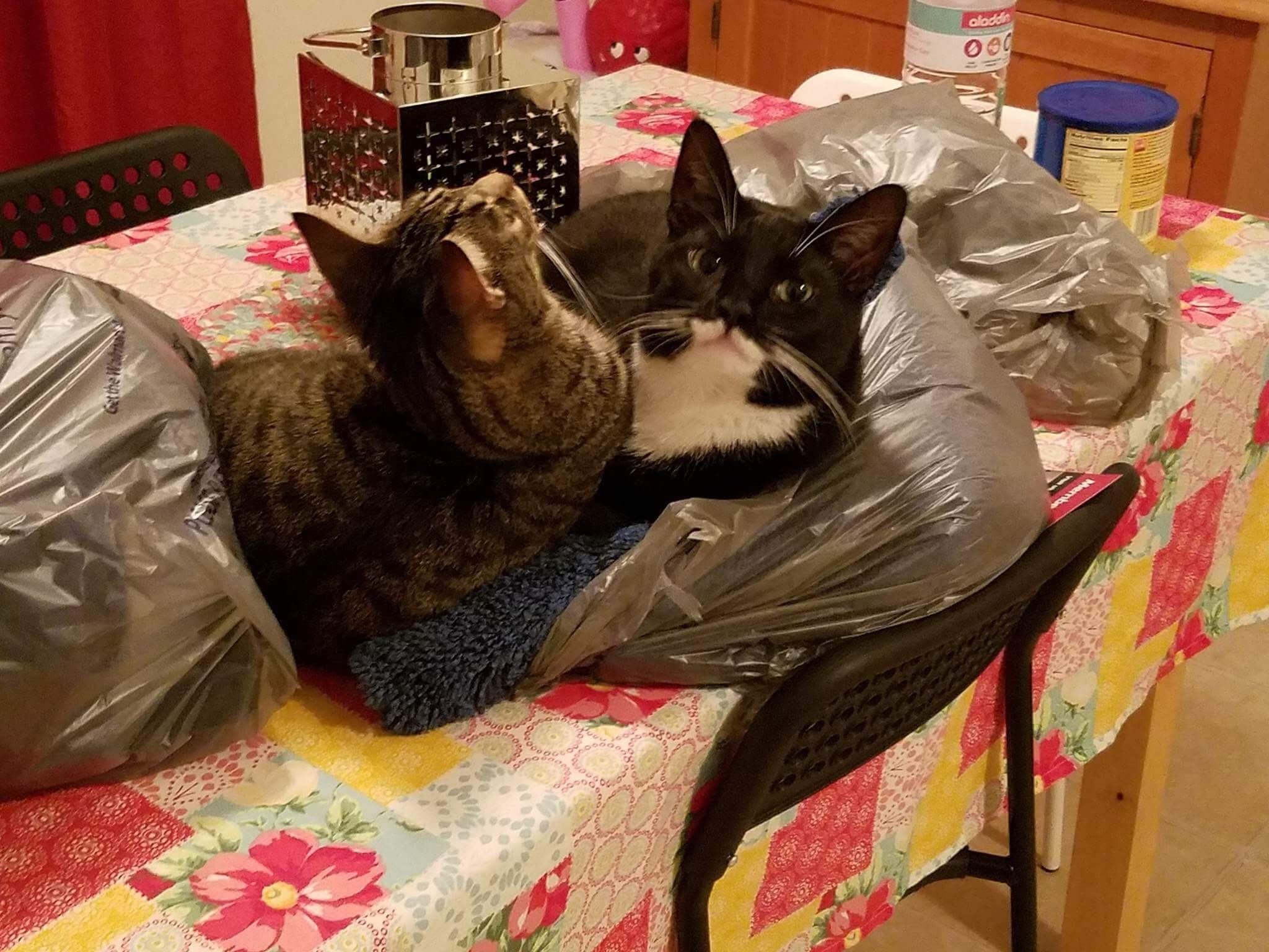 Duke and Peeta chilling out in a Walmart shopping bag. I love the ...