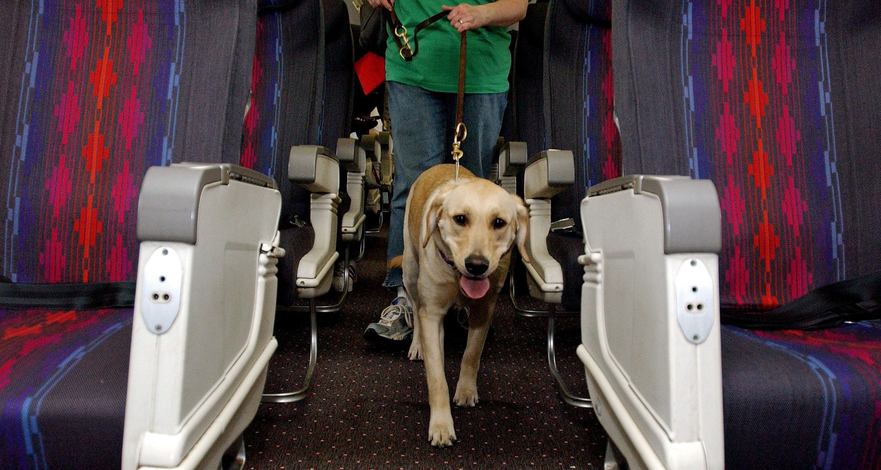 Tips for Traveling With Your Service Animal Emotional