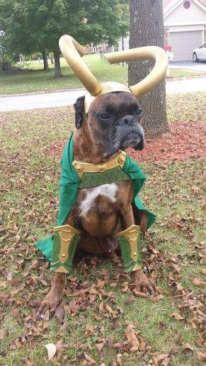 Loki Dog Costume