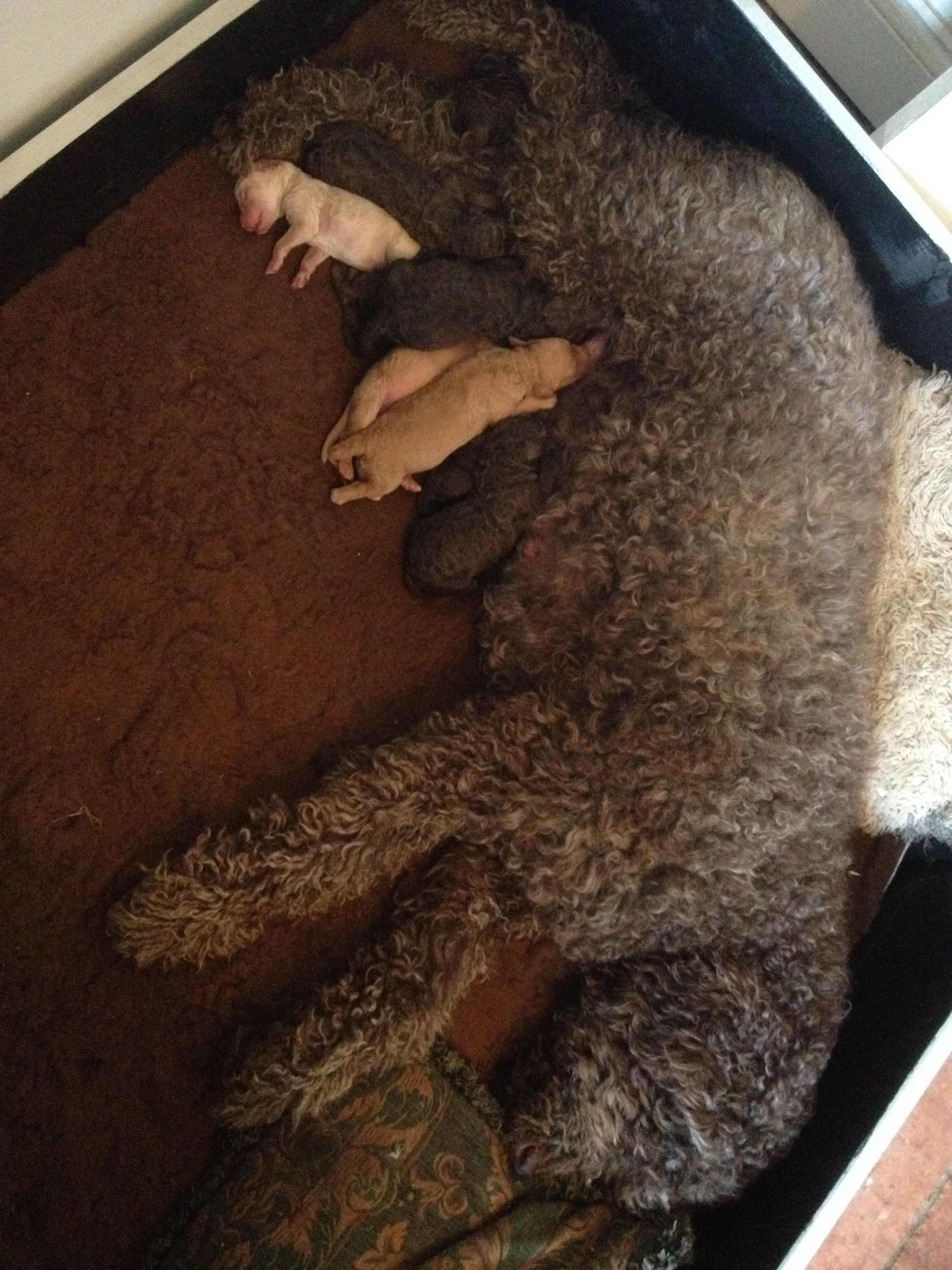 Ebony and her puppies