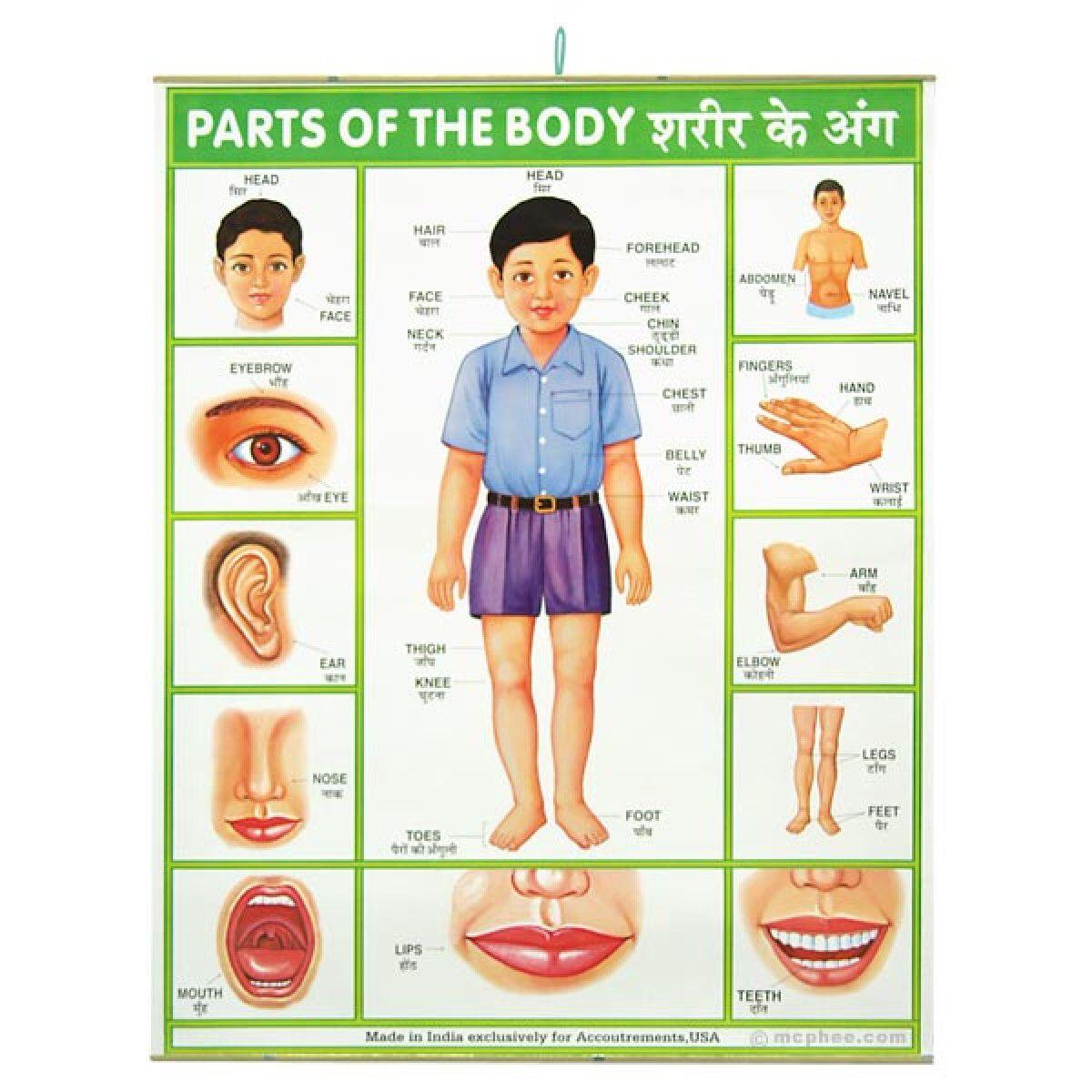 Body parts in Hindi   Around the World Unit   Body name, Body chart