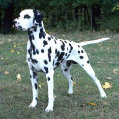 Dog Breeds Types Of Dogs Best Dog Breeds Dog Breeds