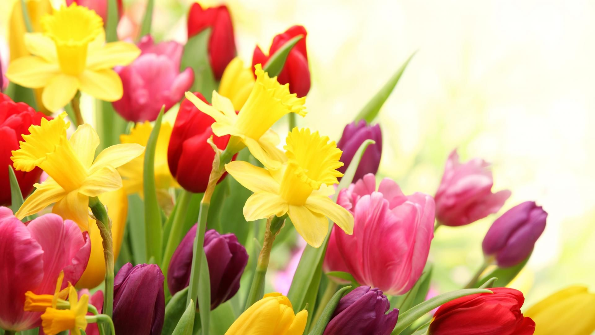 Spring flowers hd wallpapers best flower pinterest spring spring flowers hd wallpapers mightylinksfo