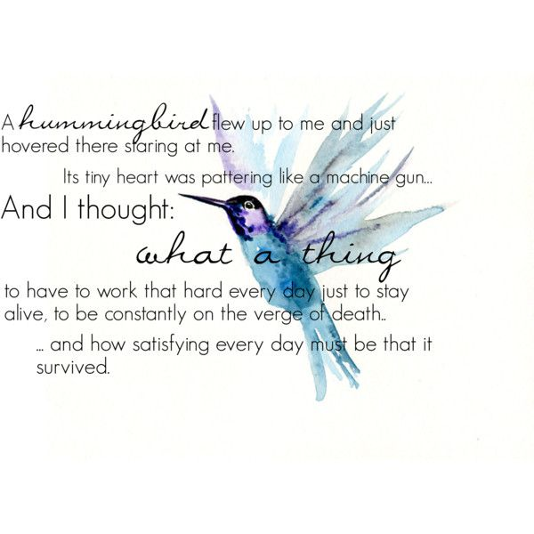 Klaus Hummingbird Quote By Kimofdrac On Polyvore Featuring Polyvore
