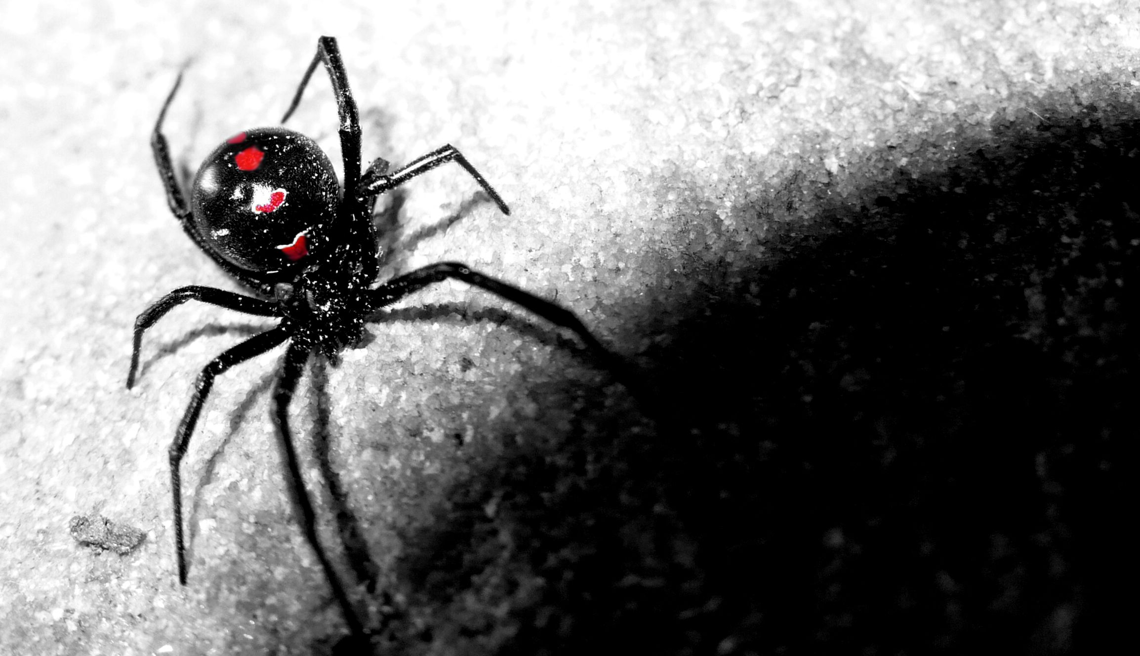web bugs spiders black background 1920x1200 wallpaper - Animals ...