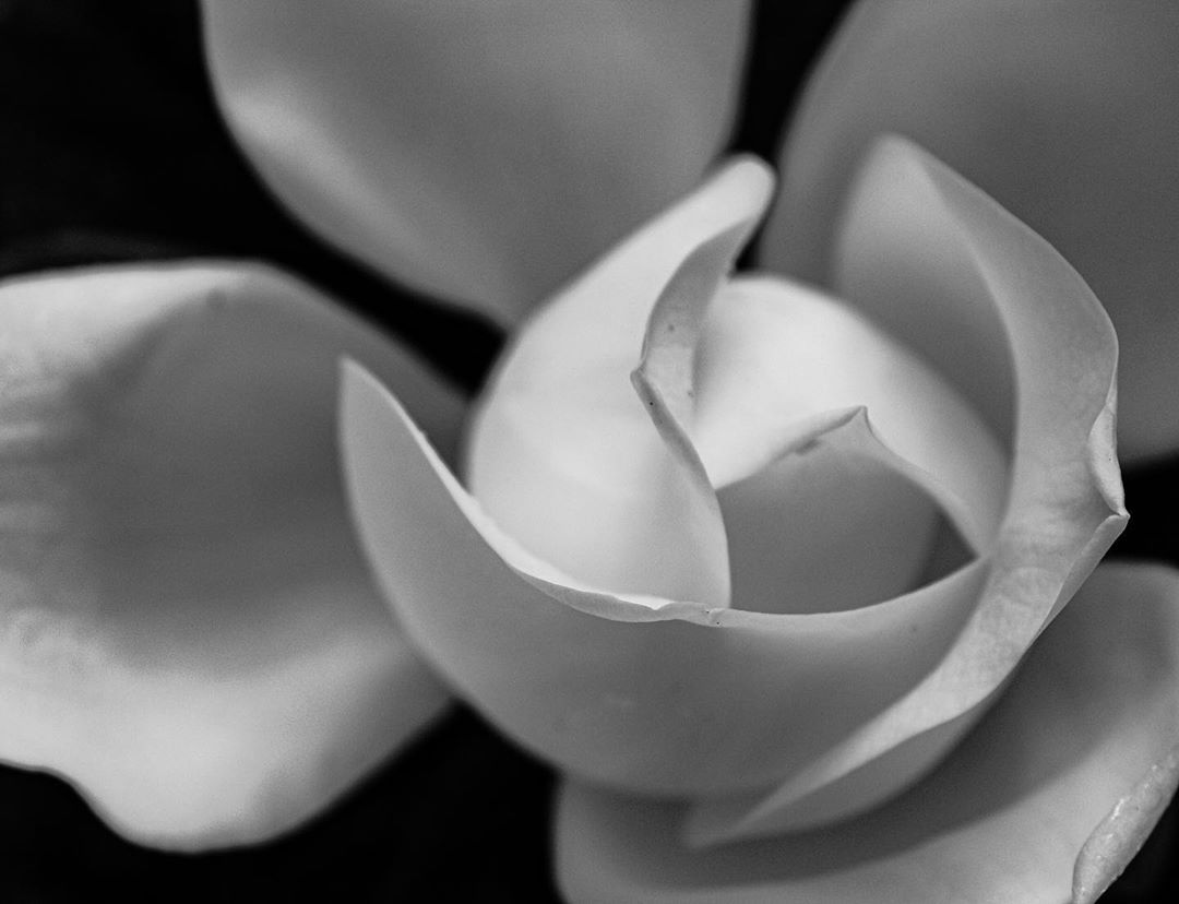 """𝓚𝓵𝓮𝓪 Photography📸 on Instagram: """"All you need is less!🌚🖤🤍 #kleasphotography . . . . . . #macrophotography #flowersofinstagram #blackandwhite #blackandwhitephotography…"""""""