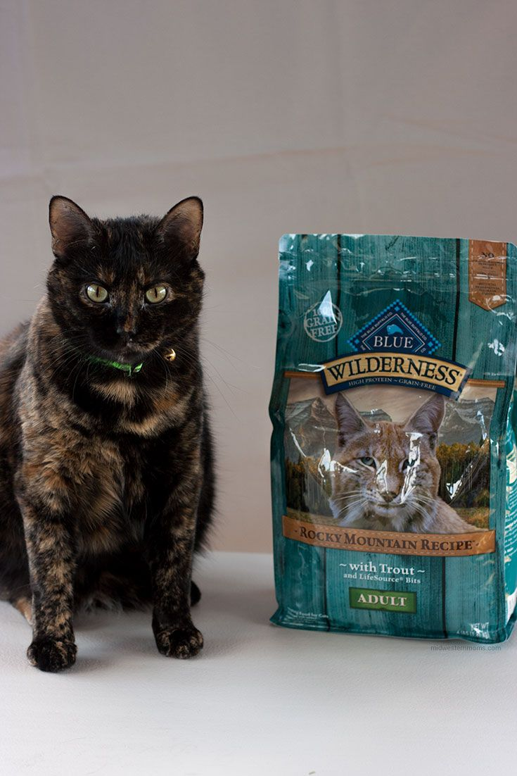 Do You Feed Your Cat Like Family Cats Miss Kitty Kitty