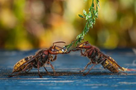 Please you first ! Photo by Wolfgang Korazija -- National Geographic Your Shot