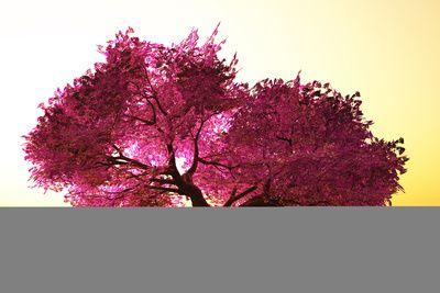 Mysterious Japanese Cherry Blossom Tree Sakura 3d Render Photographic Print Boscorelli Allposters Com Blossom Trees Cherry Blossom Tree Japanese Cherry Blossom