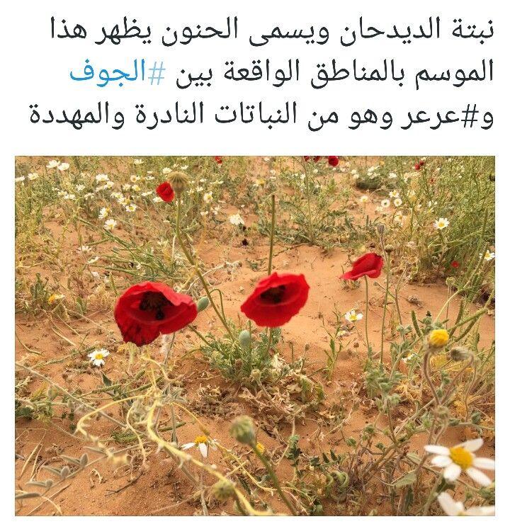 ربيع السعوديه Flowers