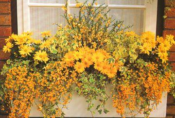 Sunny window box planting