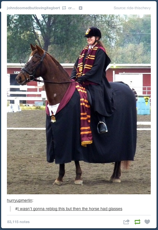 Pin By Lydia Shoup On After All This Time Always Harry Potter Memes Harry Potter Funny Horses