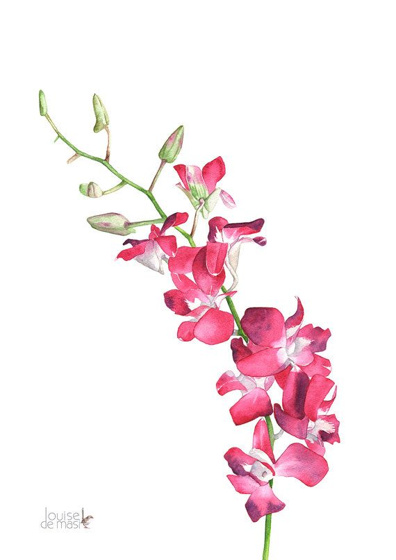 Singapore Orchid Watercolour Painting Print So10716 A4 Size