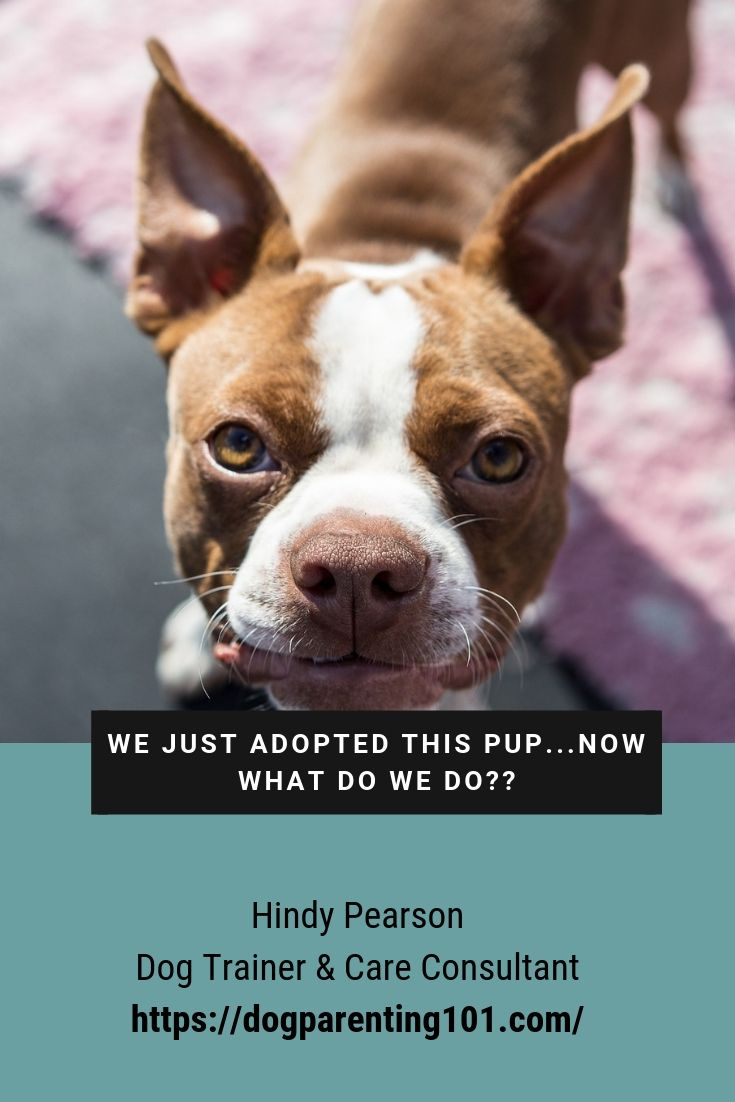 It's wonderful to hear you adopted a rescue dog, but now