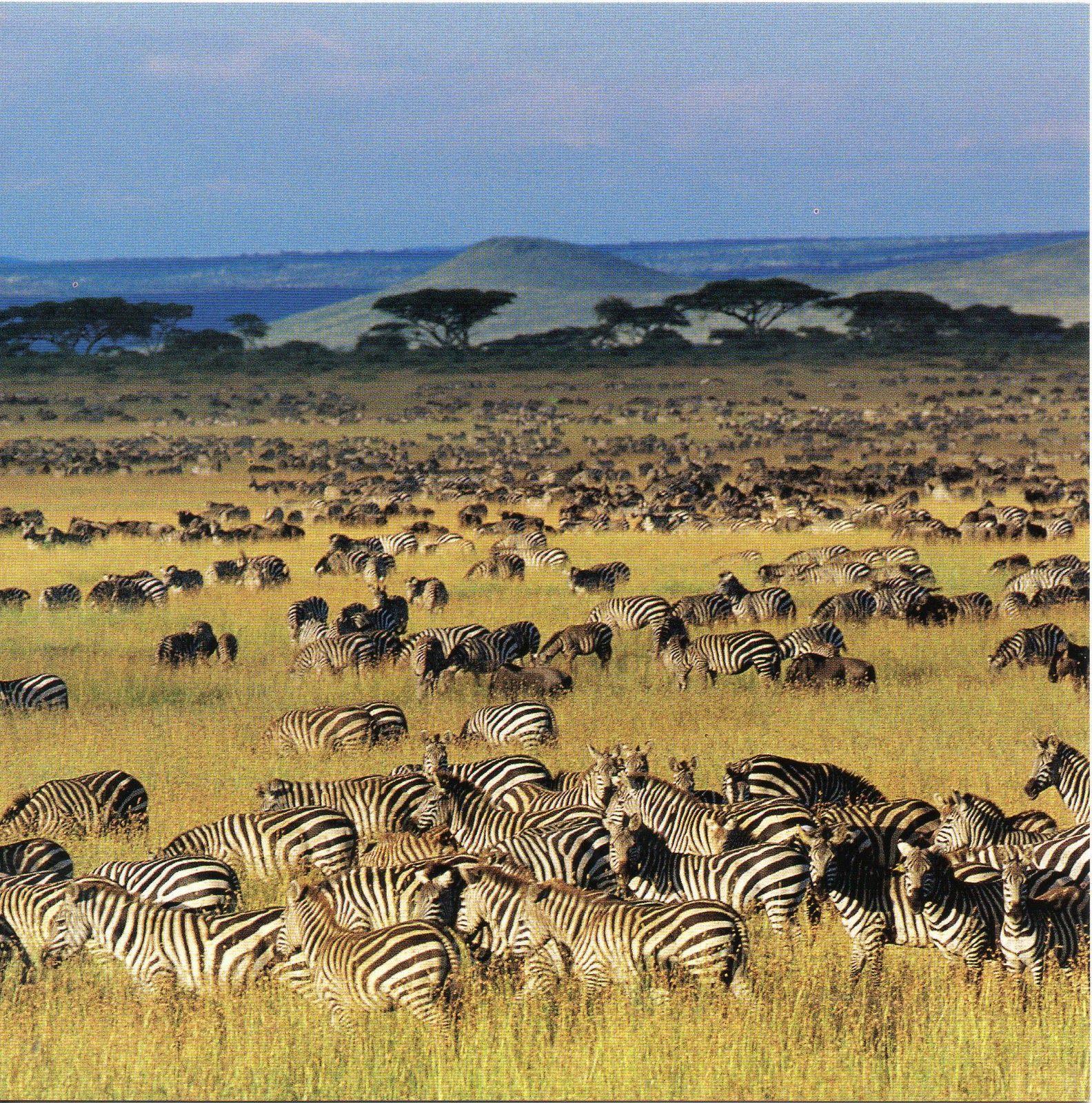 Unesco Gforpcrossing Tanzania Serengeti National Park Serengeti National Park National Parks Africa Safari