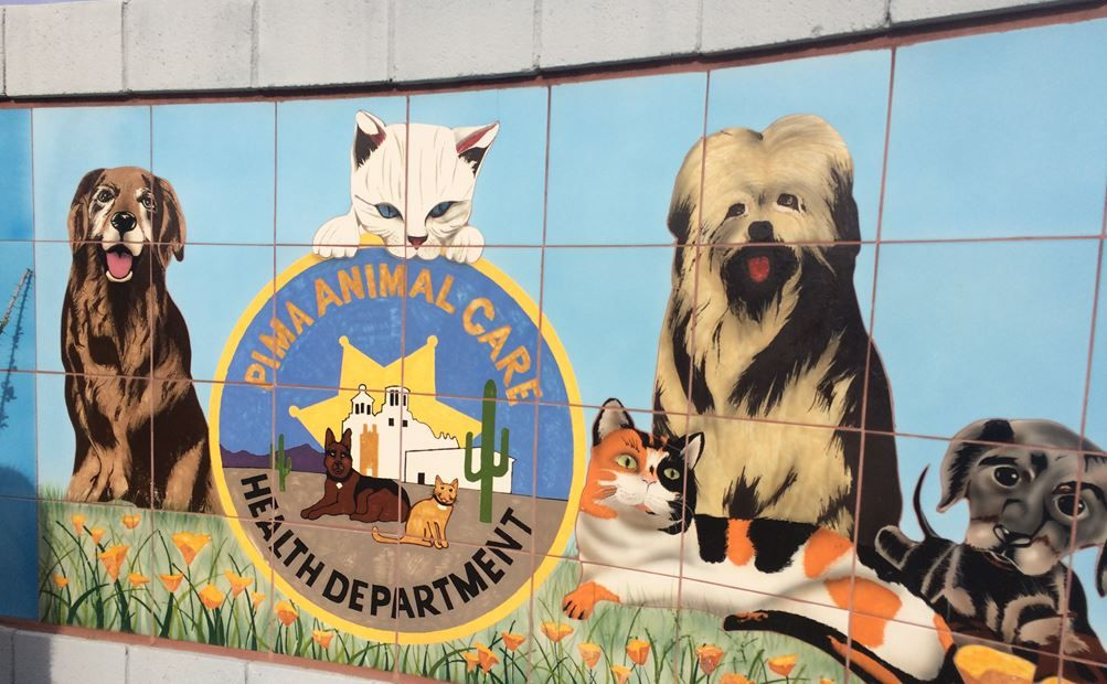 11++ Pima gov animal care ideas