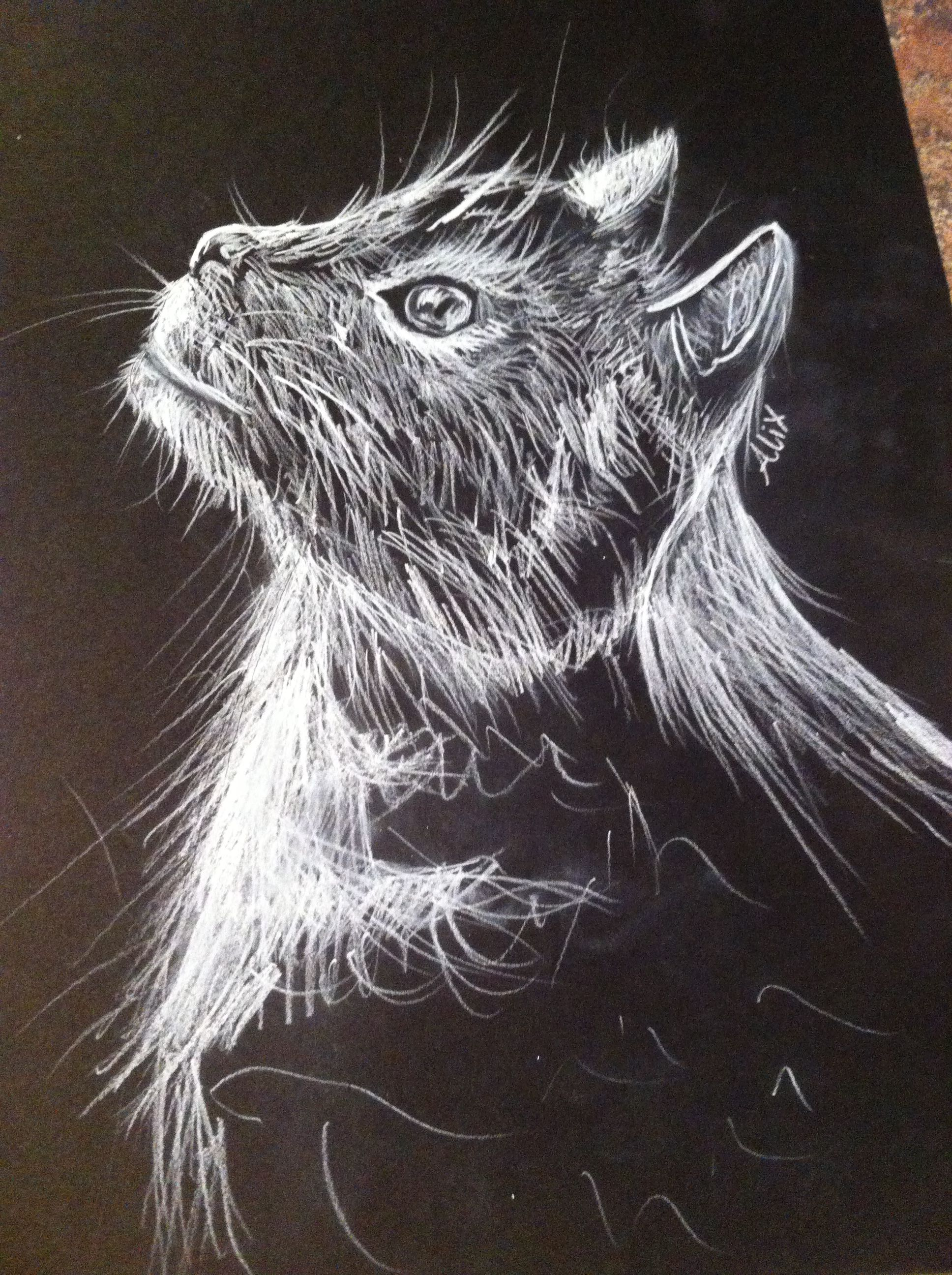 Cat drawing white charcoal on black paper