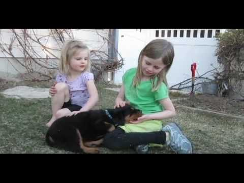 Rottweiler Puppy, first two weeks with our new rottweiler puppy. Puppy Playing, Puppy Training, rottweiler playing with kids, friendly Rottweiler, Rottweiler attacks swifer. Puppy Cryes. Puppy First Time Home. Have an extra 7 mins in your day.. Enjoy our video.