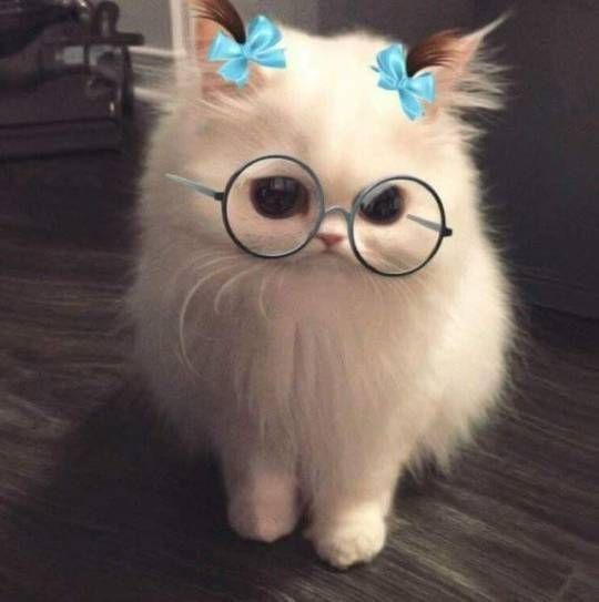 Cute Cat, harry poter cat