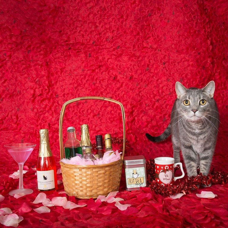 This week it's National Drink Wine with Your Cat Week. So