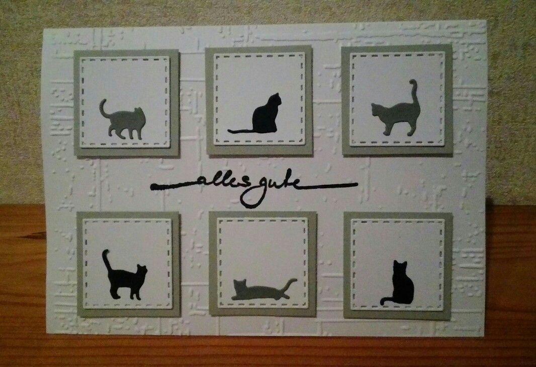 Wer mag sie nicht, die kleinen Kätzchen!