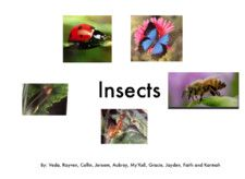 Insects by Ms. Hennon's Class and Others