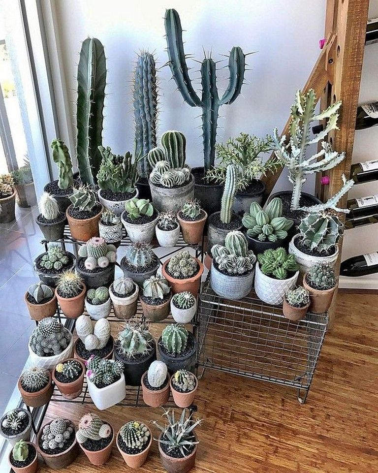 27 Beauty Cactus And Succulent Garden Ideas For Indoor Page 16