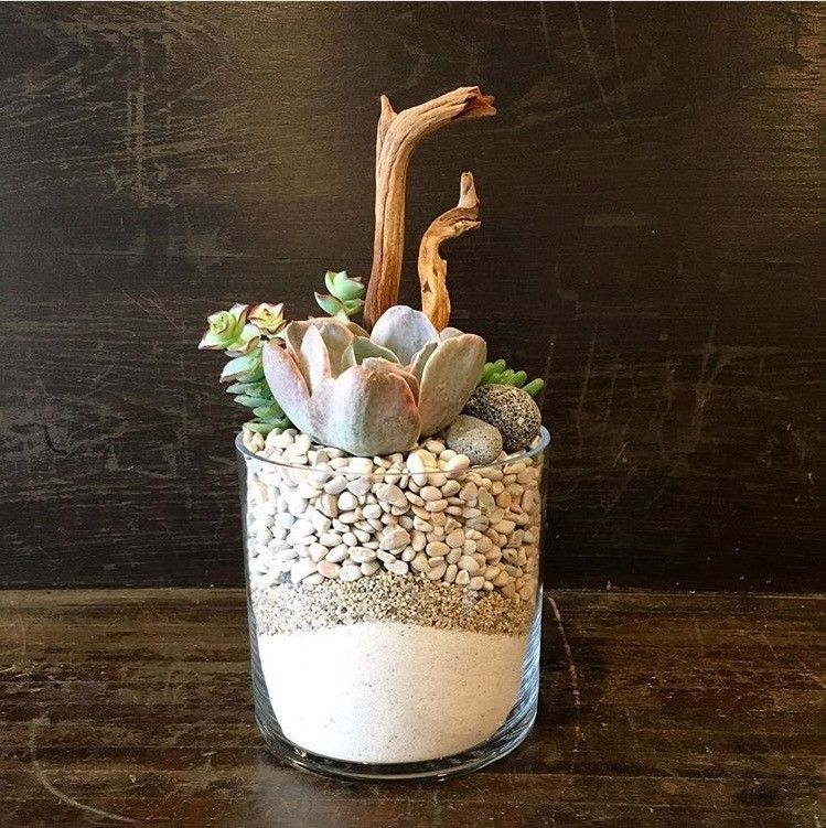 Succulent in a cylinder vase with white sand white rocks for the send the succulent in a cylinder vase with white sand white rocks bouquet of flowers from the juicy leaf in los angeles ca local fresh flower delivery mightylinksfo
